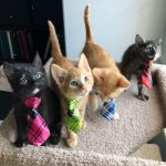 funny animals 002737 005 150x150 Business Cats