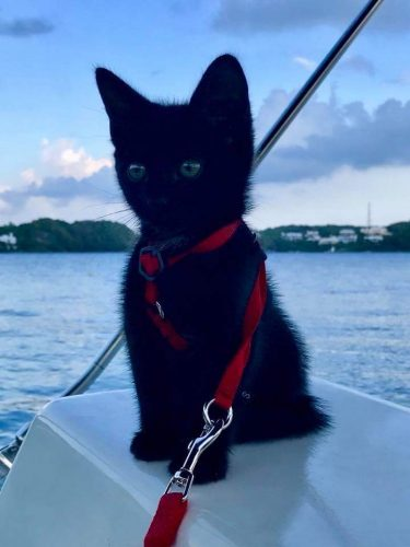 pVarpkAksLgDGSUGEedEpiEz91 TiaKBsgcnJx9mF5E 375x500 This is our Hammy 2 months ago with his first boat ride with us. He thinks he is helping navigate lol