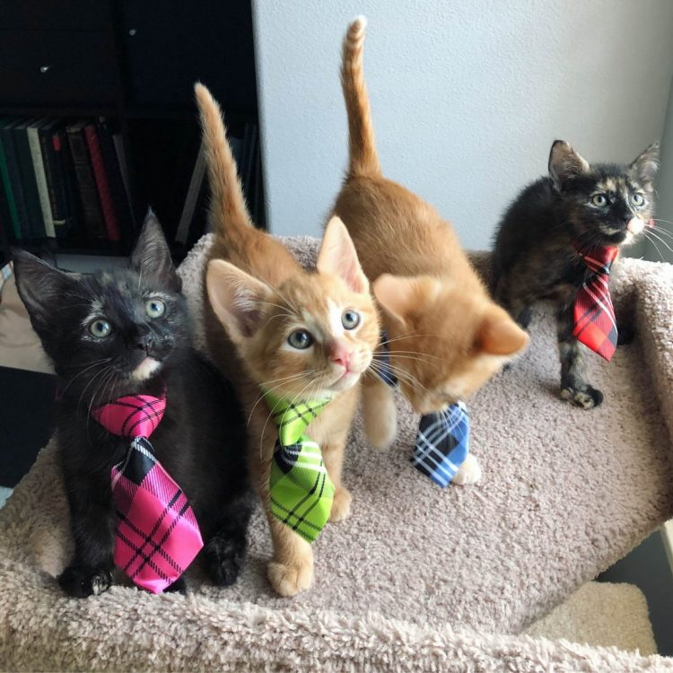 Business Cats 750x750 Business Cats