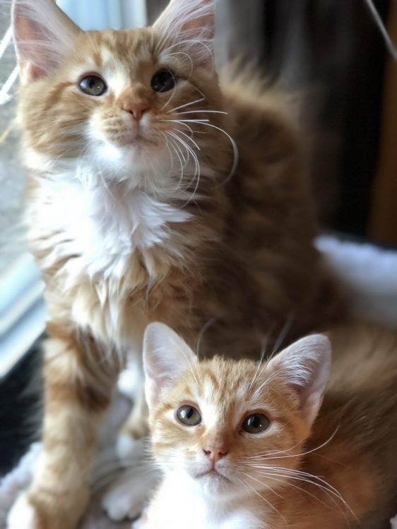 Cute Kittens looking up 562x750 Cute Kittens looking up
