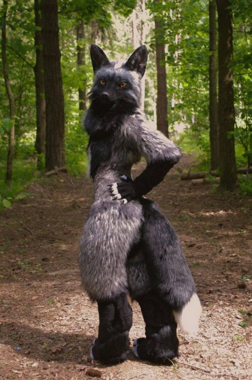 Forest Furry 498x750 Forest Furry