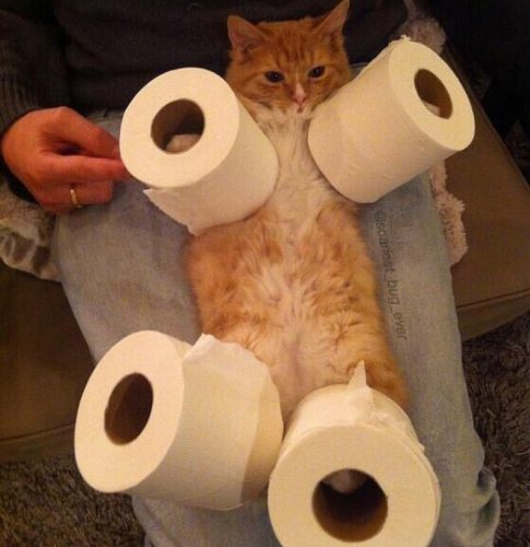 bdxmcvela0o11 485x500 Cat with toilet paper on its legs