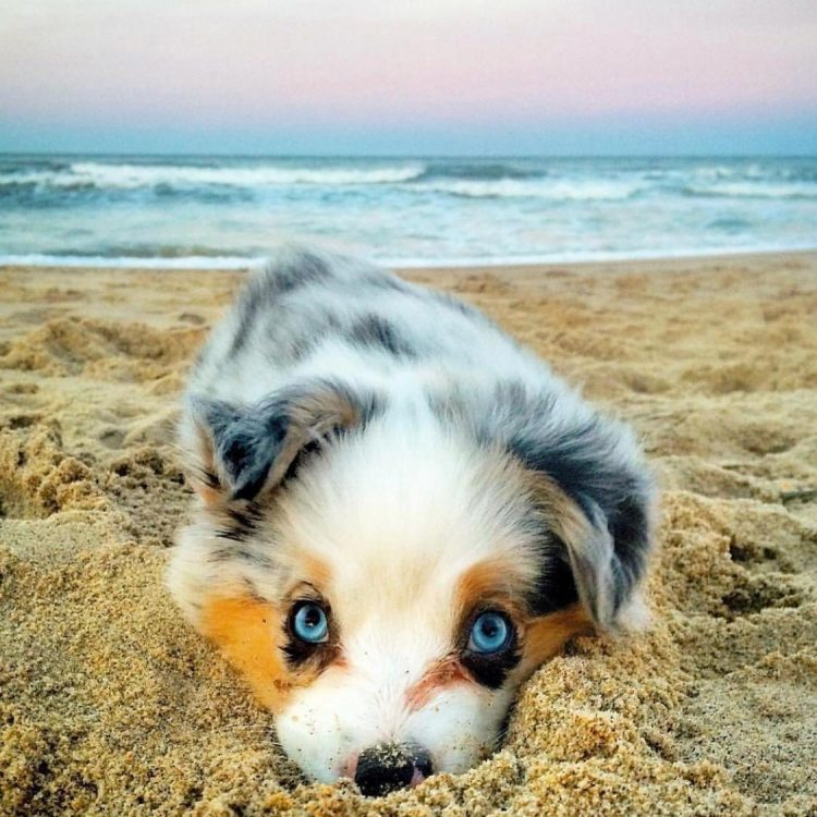 blue eyed beach pup 750x750 blue eyed beach pup