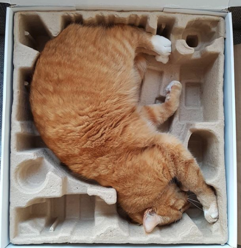 l90QnfGFy A99 Ph54JSxTiyxhMDasVyhtQ1gljLLQw 485x500 Cat fits packaging perfectly.