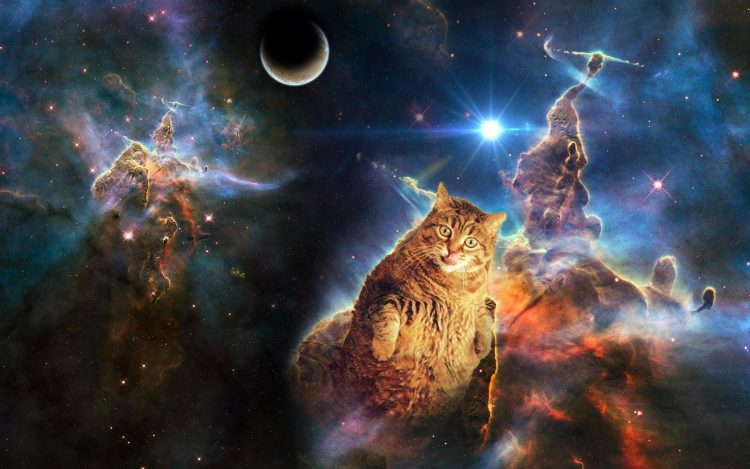 space cats 750x469 space cats