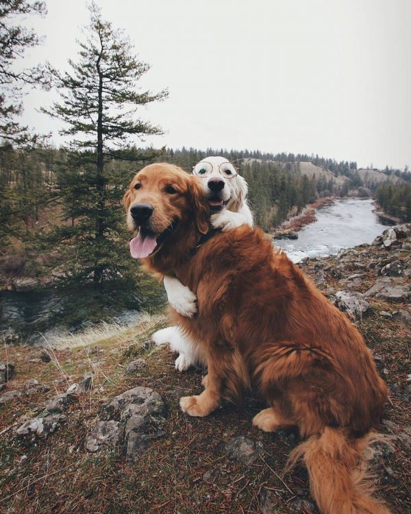 two sweet puppers 600x750 two sweet puppers