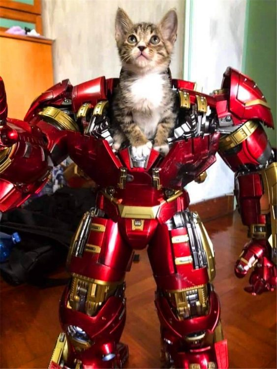 iron man kitten 563x750 iron man kitten