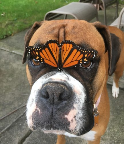 sxw91dx2vnp11 433x500 Our boxer made a new friend today.