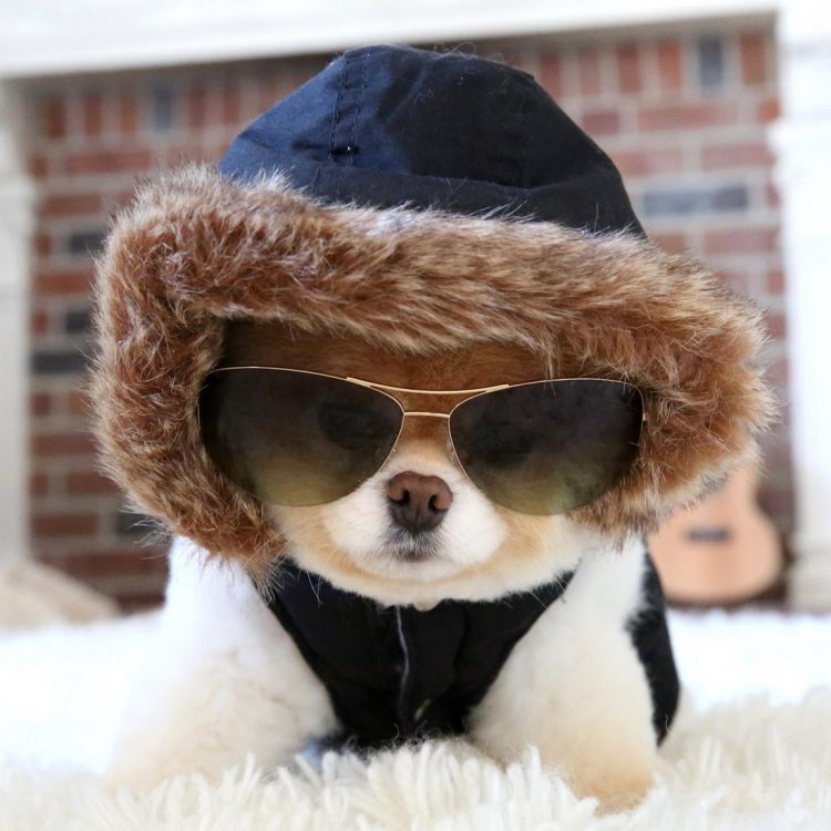 Cool Doggy 750x750 Cool Doggy