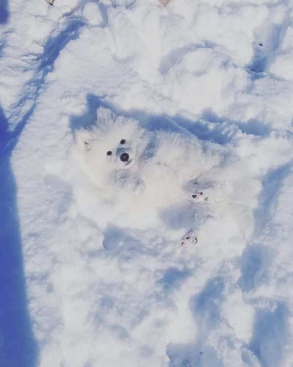 Snow Floof 600x750 Snow Floof