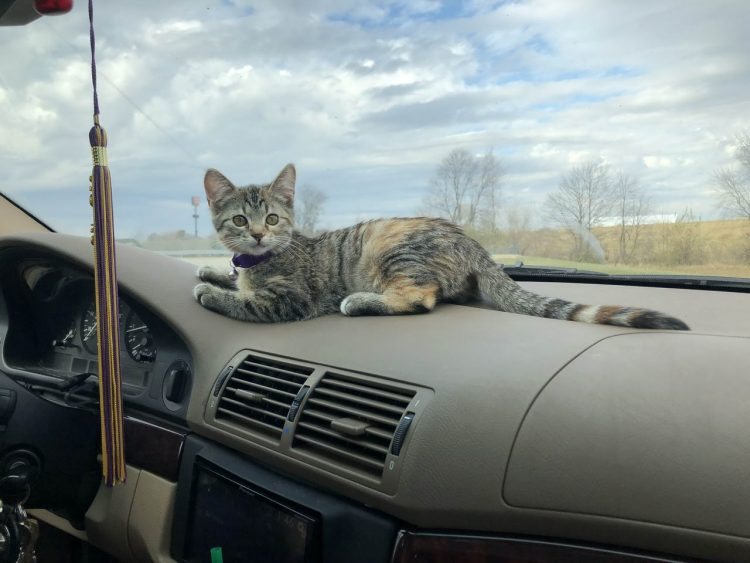car dash cat 750x563 car dash cat