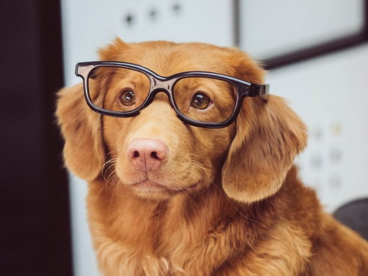 doggo in glasses 750x563 doggo in glasses.jpg