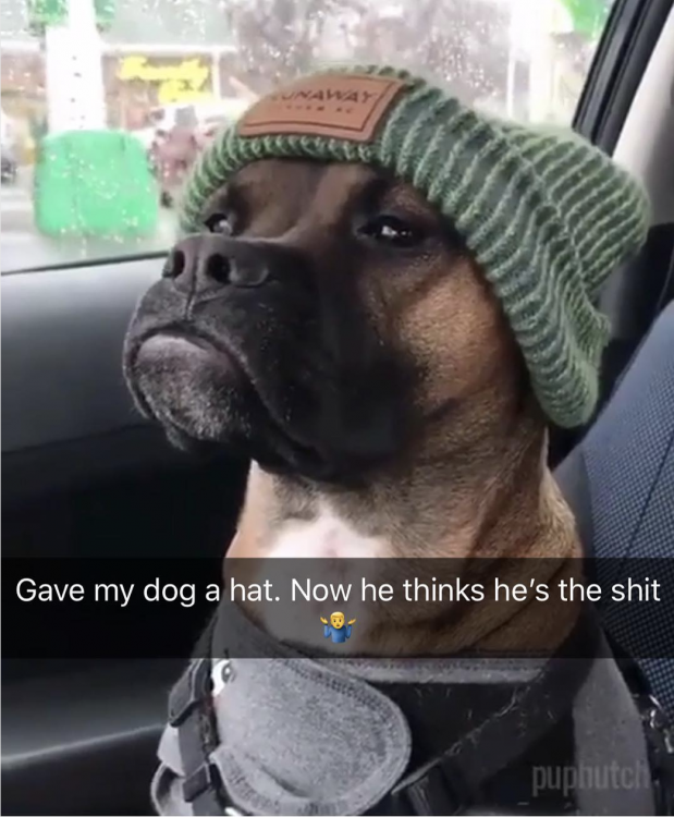 gave my dog a hat 619x750 gave my dog a hat
