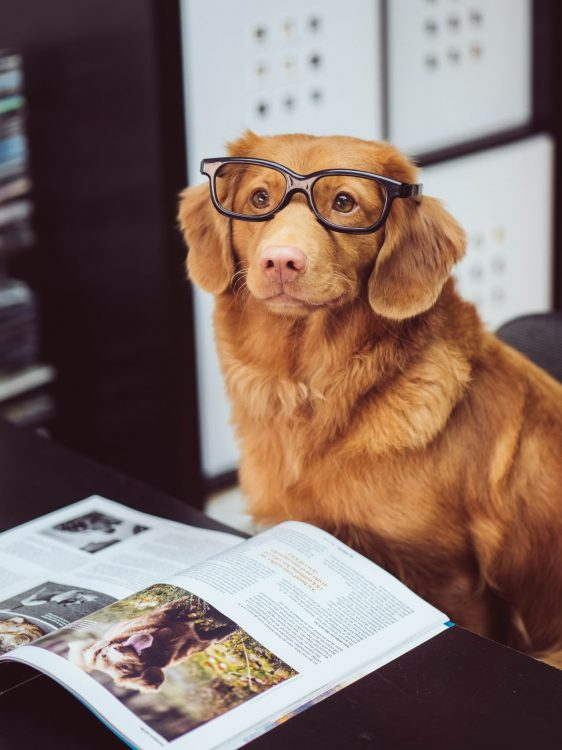 smart puppers 562x750 smart puppers
