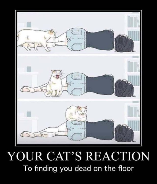 your cats Reaction 640x750 your cats Reaction