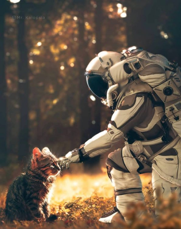 Astronaut Petting A Kitty 595x750 Astronaut Petting A Kitty