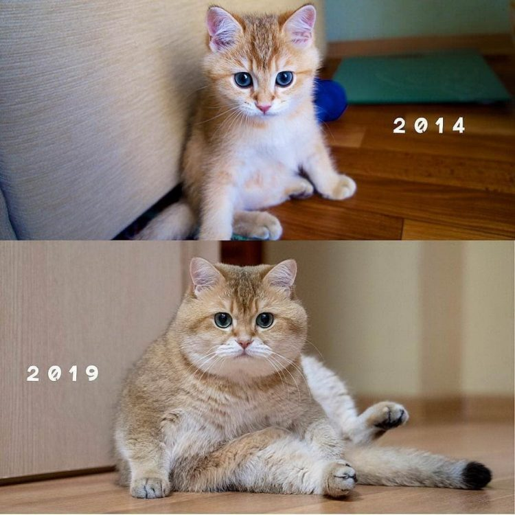 2014 to 2019 750x750 2014 to 2019