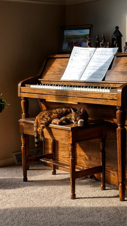 Cat on Piano 422x750 Cat on Piano