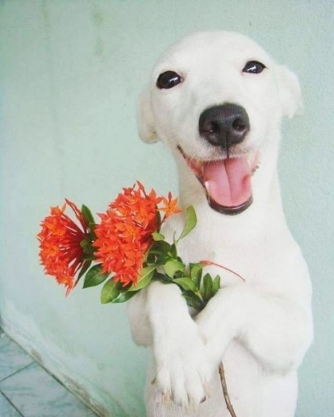 Flowers From a Dog Flowers From a Dog