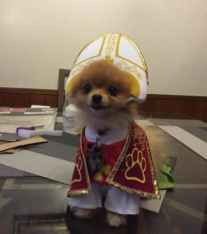 Pope Pup 665x750 Pope Pup