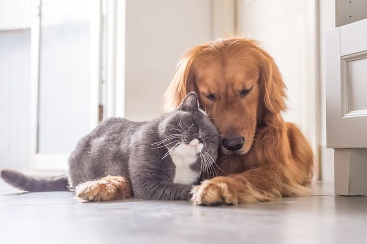 cat and dog cat and dog