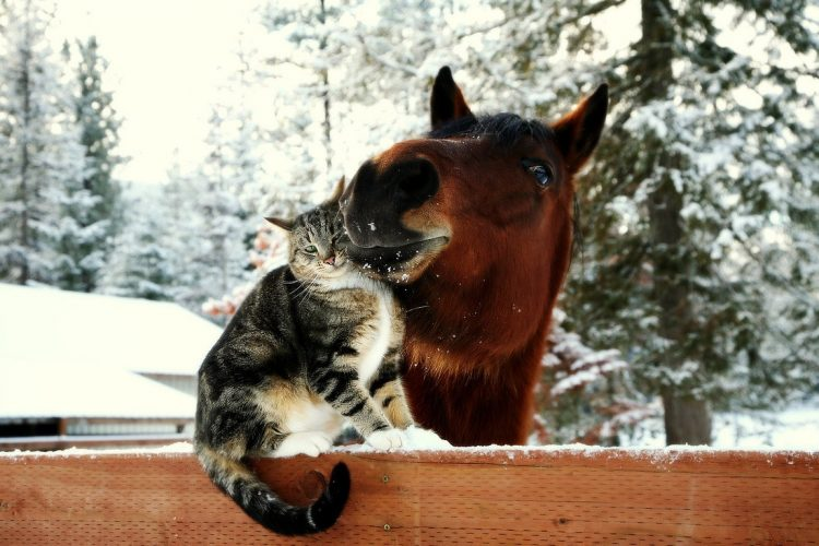 cat and horse 750x500 cat and horse