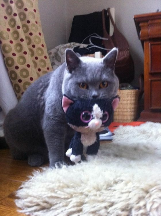 cat with toy 560x750 cat with toy
