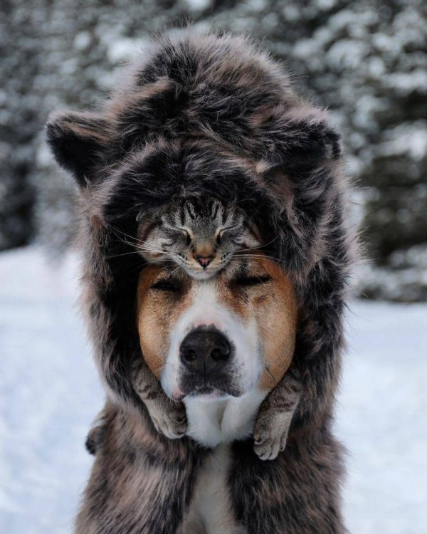 dog with a cat hat 600x750 dog with a cat hat