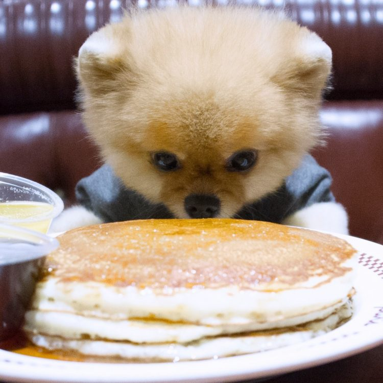 epic dog pancakes 750x750 epic dog pancakes