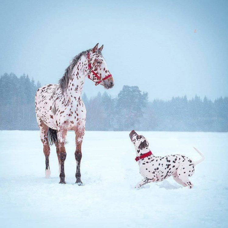 freckels on horse and dog 750x750 freckels on horse and dog