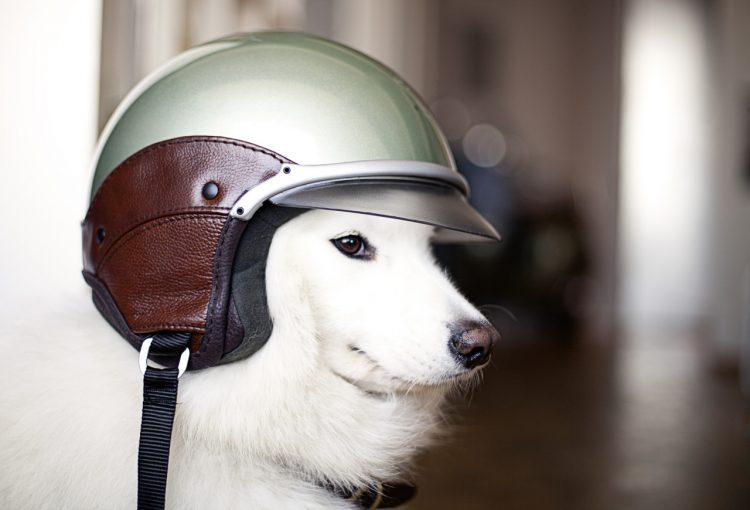 helmet dog 750x510 helmet dog