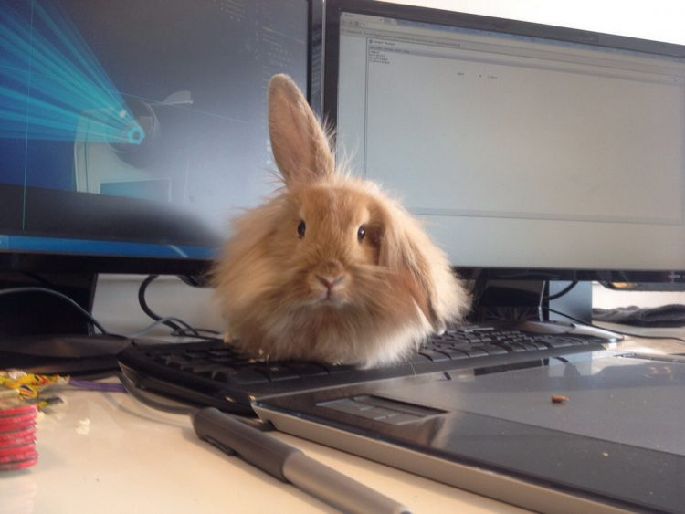 keyboard bunny with one ear up 750x563 keyboard bunny with one ear up