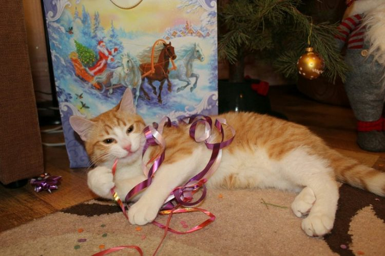 party cat with ribbons
