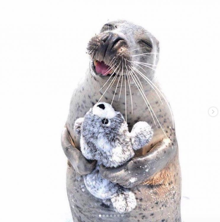 seal with toy 744x750 seal with toy