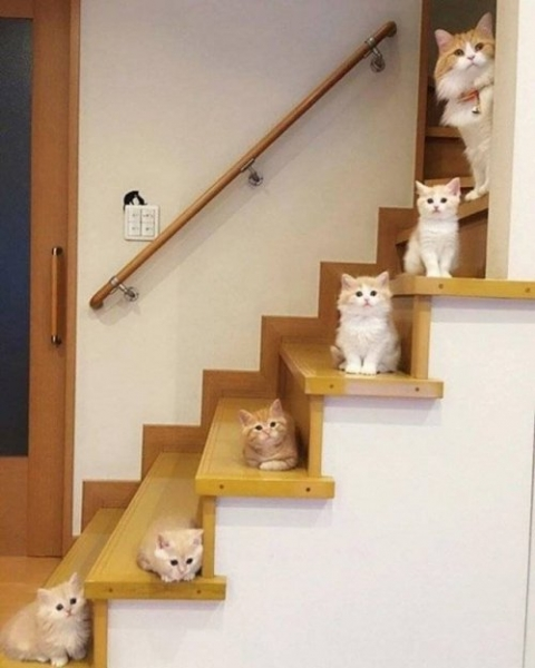 stair cats stair cats