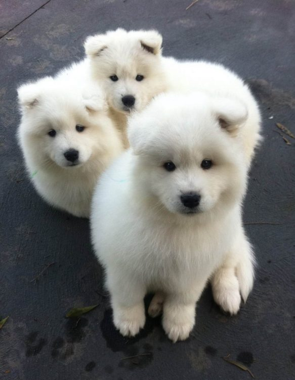 three floofs 583x750 three floofs