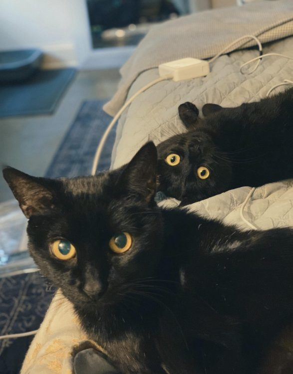 two black cats 587x750 two black cats