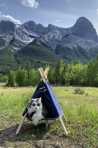 u3vpq460gz231 331x500 r/photoshopbattles   PsBattle: This Cat in a Tent with Sunglasses