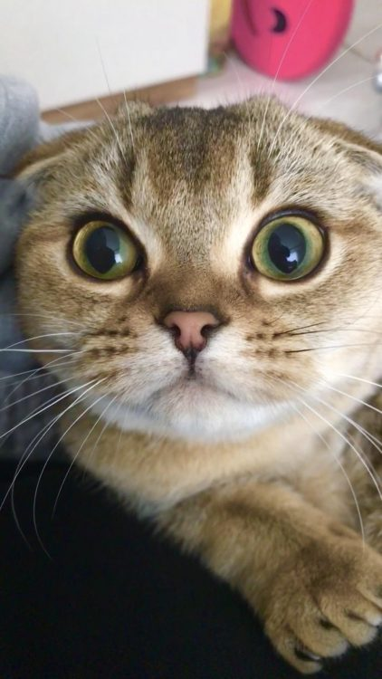 wide eyed kitty 422x750 wide eyed kitty