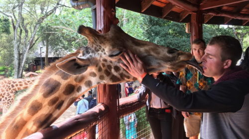 images 005246 035 500x280 kiss from an animal