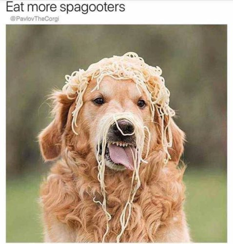 1576782043 yqtkow71x7 478x500 Eat More Spagooters