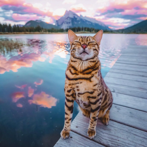 7xx9oi9wx2i41 500x500 tiger cat at the lake