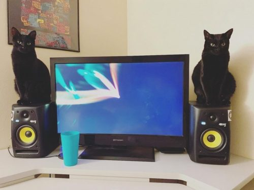 daily picdump 005602 033 500x375 stereo speaker cats