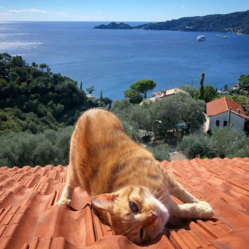 daily picdump 005938 009 500x500 roof cat