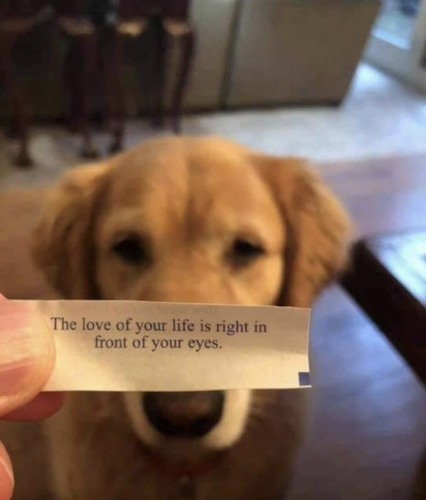 rwoulx4d21z61 426x500 fortune cookie couldn't be more true '